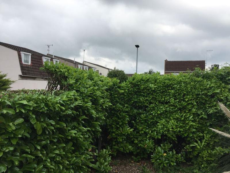Image 5 - laurel hedge to reduce in Peterborough