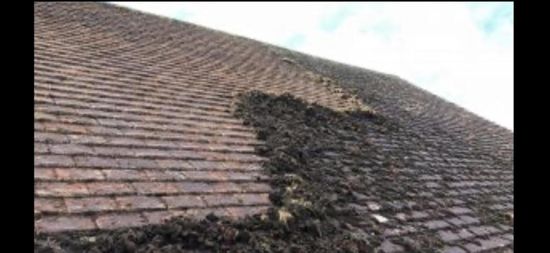 Image 6 - Roof cleaning & moss removal