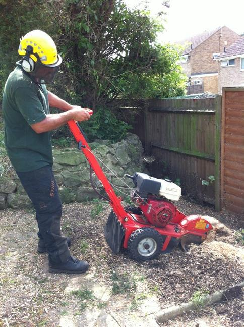 Image 5 - Stump Grinding Services