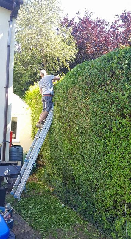 Image 28 - Hedge cutting