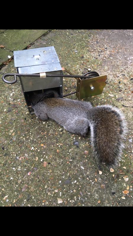 Image 5 - Squirrel control in Leytonstone