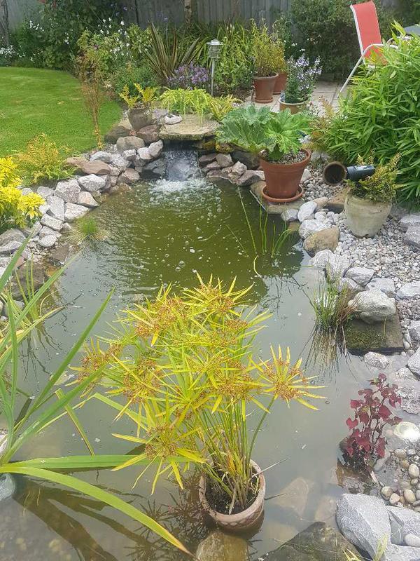 Image 58 - Wild life pond