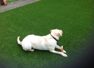 Image 5 - Artificial Grass suppliers for Pets
