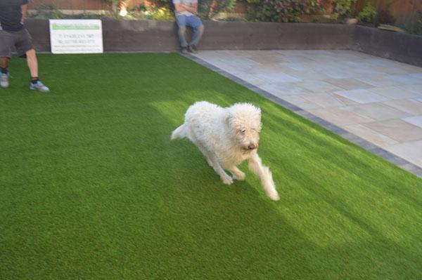 Image 6 - Premium Artificial Grass is Pet Friendly