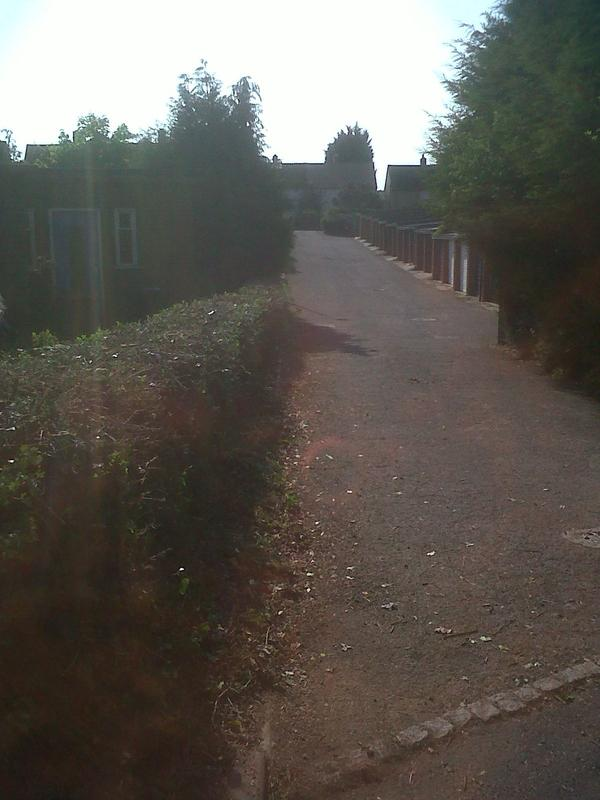 Image 11 - overgrown hedge after cutting