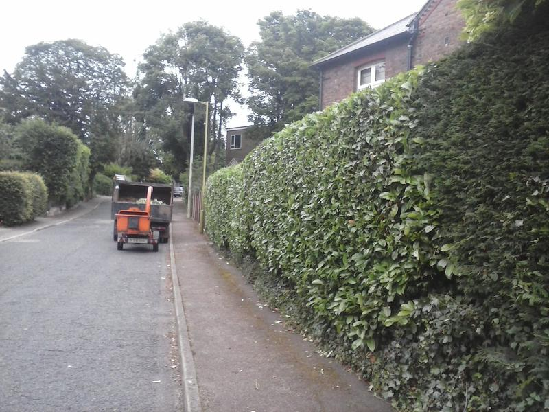 Image 7 - mature hedge after cutting