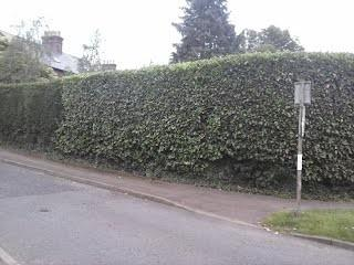 Image 9 - large hedge after cutting