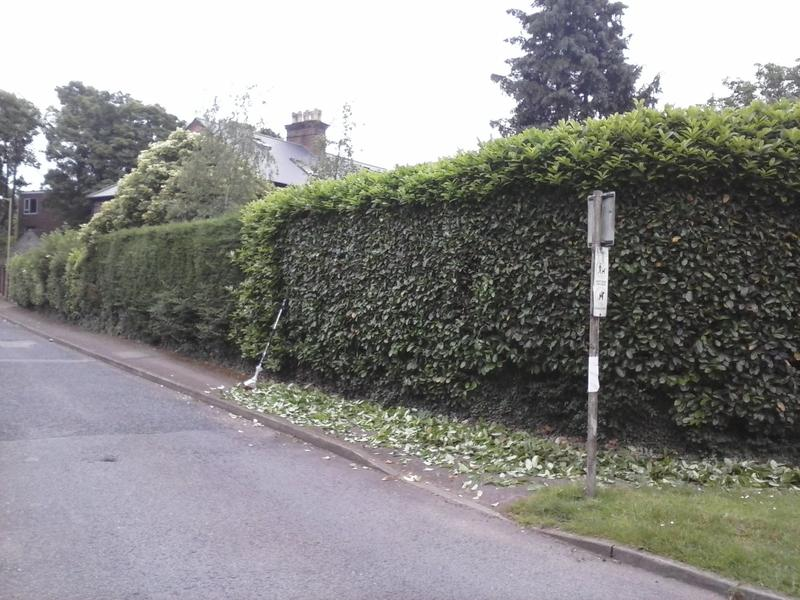 Image 8 - large hedge before cutting