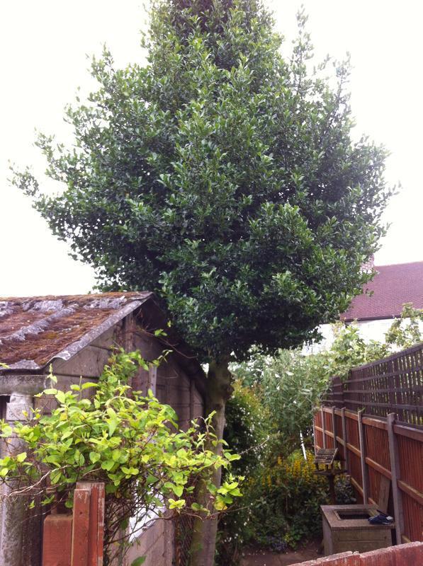 Image 118 - Tree felling
