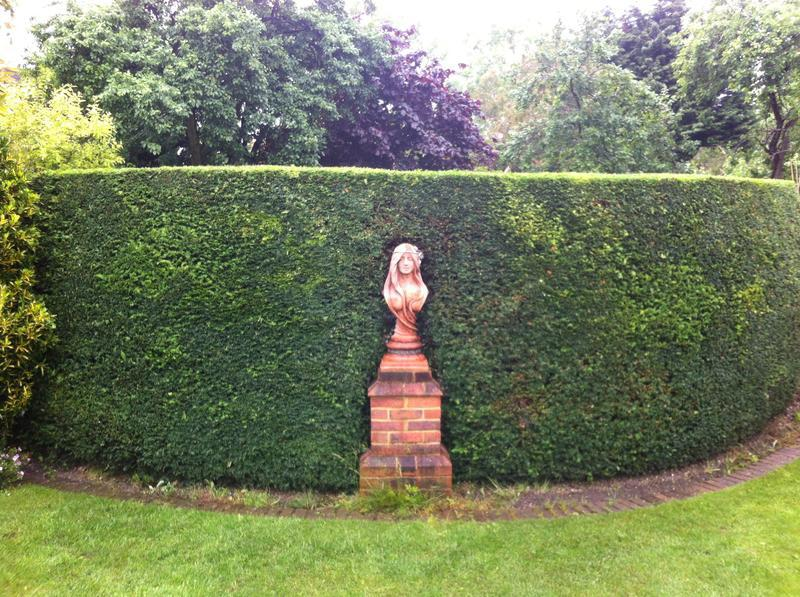 Image 43 - Hedge trimming conifers