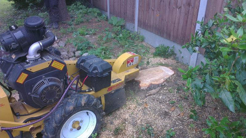 Image 8 - stump removal