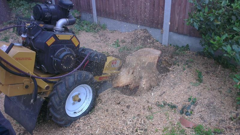 Image 9 - stump removal