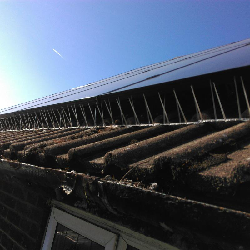 Image 21 - Bird proofing under solar panels