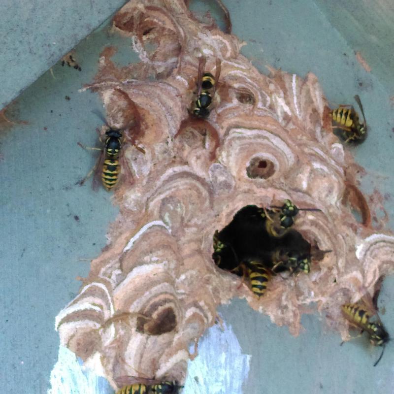 Image 35 - Lovely wasp nest