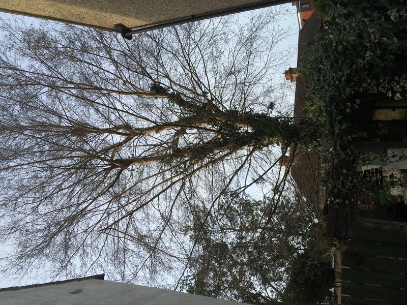 Image 40 - Silver Birch take down in Dagenham