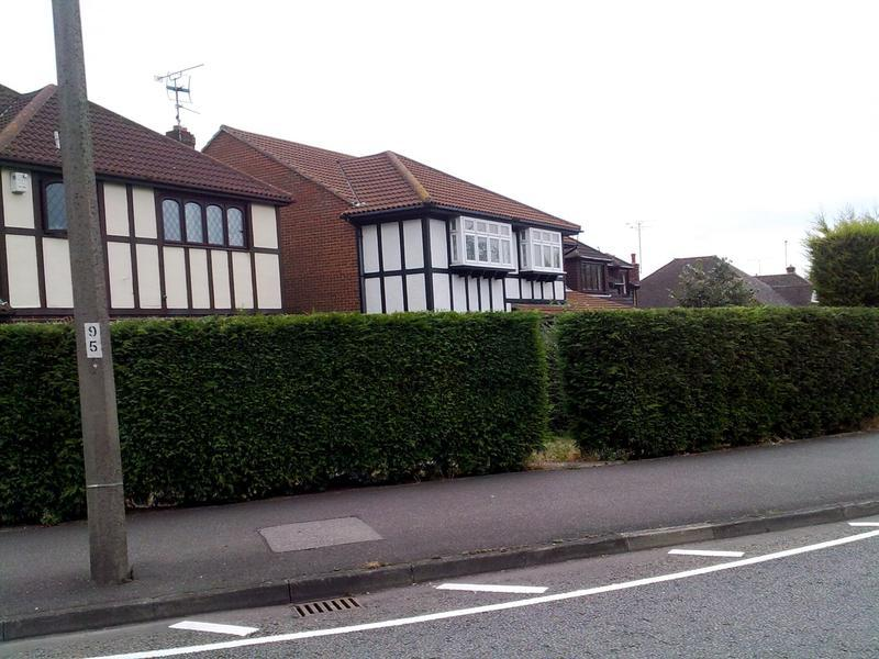 Image 6 - Hedge topping in Shoebury