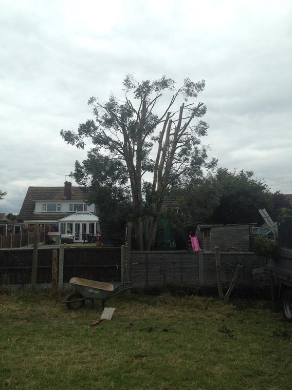 Image 5 - Eucalyptus reduction in Hullbridge after