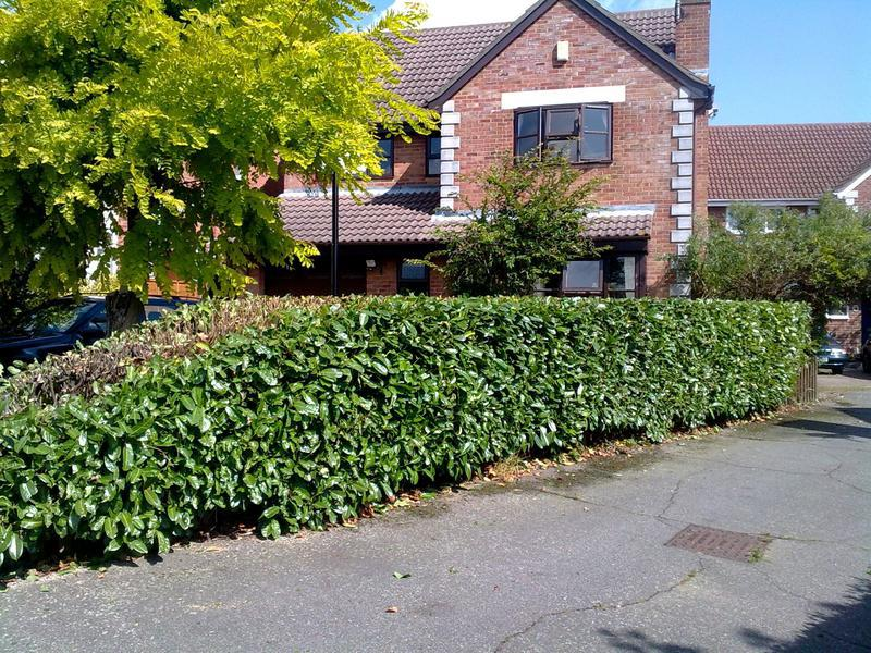 Image 2 - hedge topping in hockley