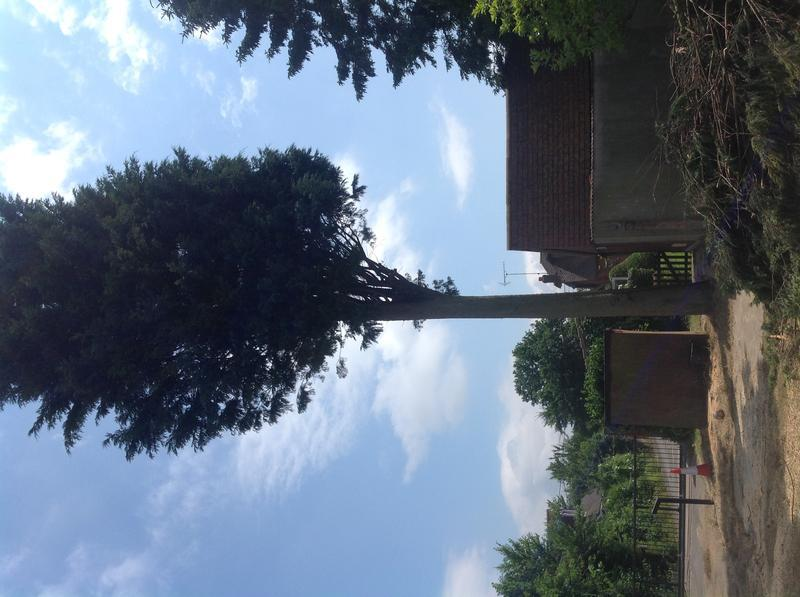 Image 19 - Conifer take down Hullbridge during