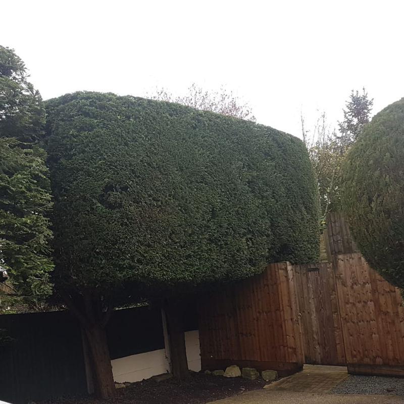 Image 3 - Hedge after