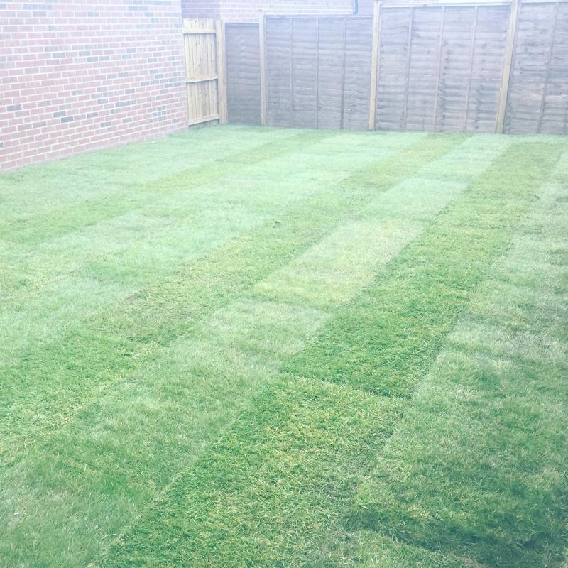 Image 63 - New garden lawn