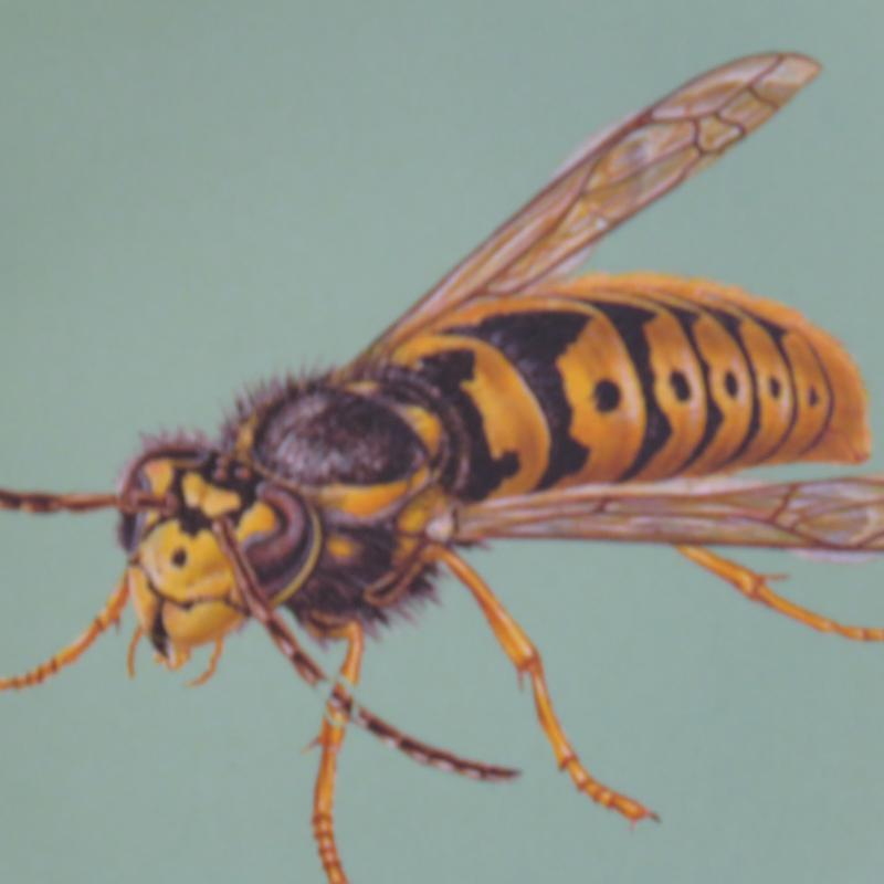 Image 22 - Wasp Nest Removal Specialists