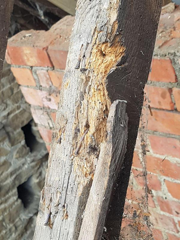 Image 26 - RAFTER AND JOINT REPAIR AND REPLACEMENT