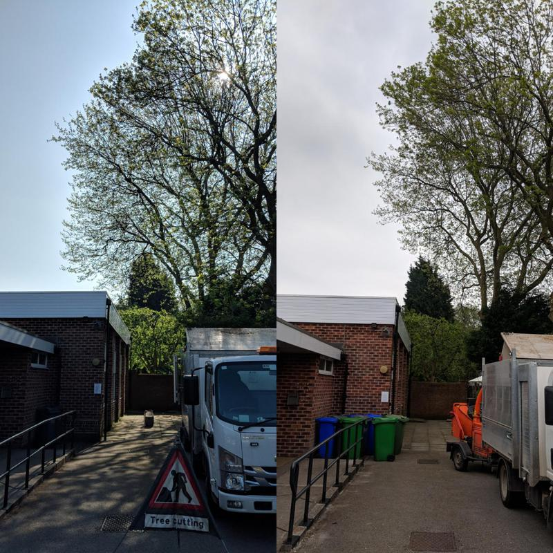 Image 3 - Reduced this large London place away for this property allowing a 4 mtr clearance from the building. Hopefully preventing any damage to the roof in the next few years.