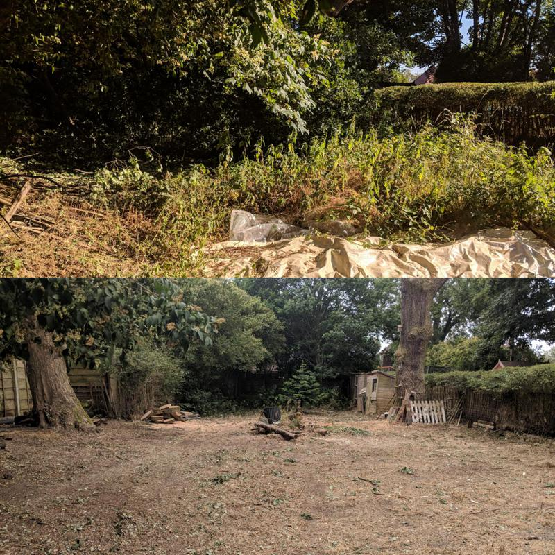 Image 2 - This garden clearance was long overdue. Here we lifted and deadwooded all the trees in the garden along with cutting back all the growth. Hopefully making it easier for the owner to maintain.
