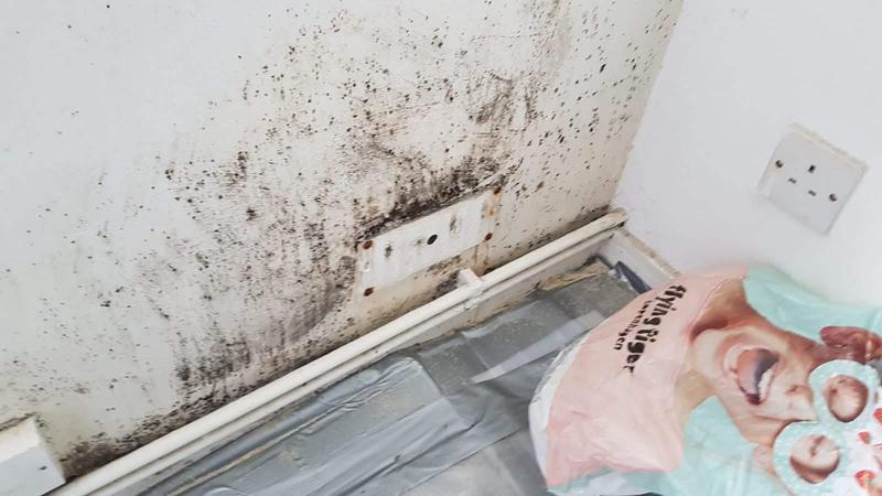 Image 57 - Damp investigation.