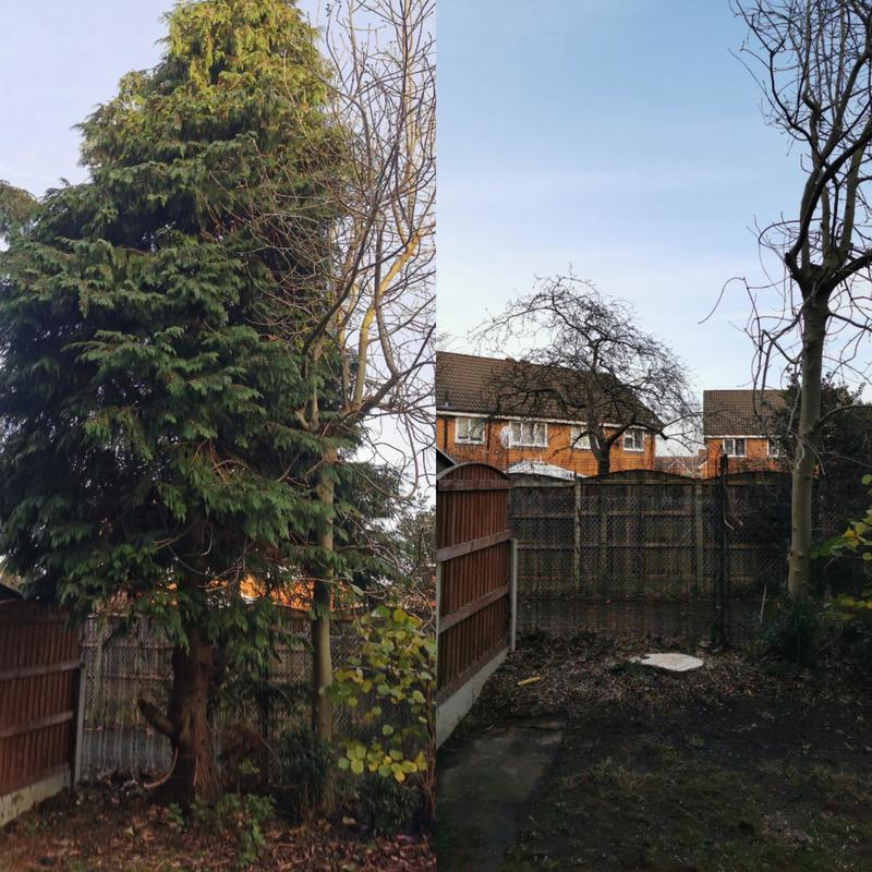 Image 9 - Removing this small Conifer tree has improved light in the garden. Prevented the fencing for being damaged In the future.