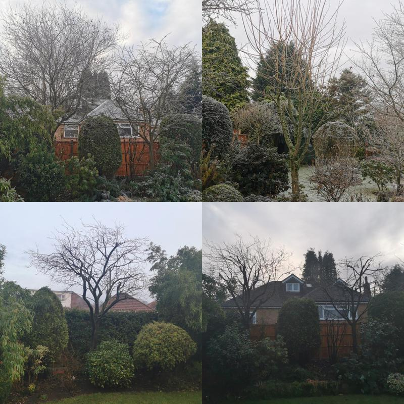 Image 11 - During the winter we try to recommend all our customers to have there malus and prunus trees pruned. Especially in the falling sap months. To help growth over the upcoming year.
