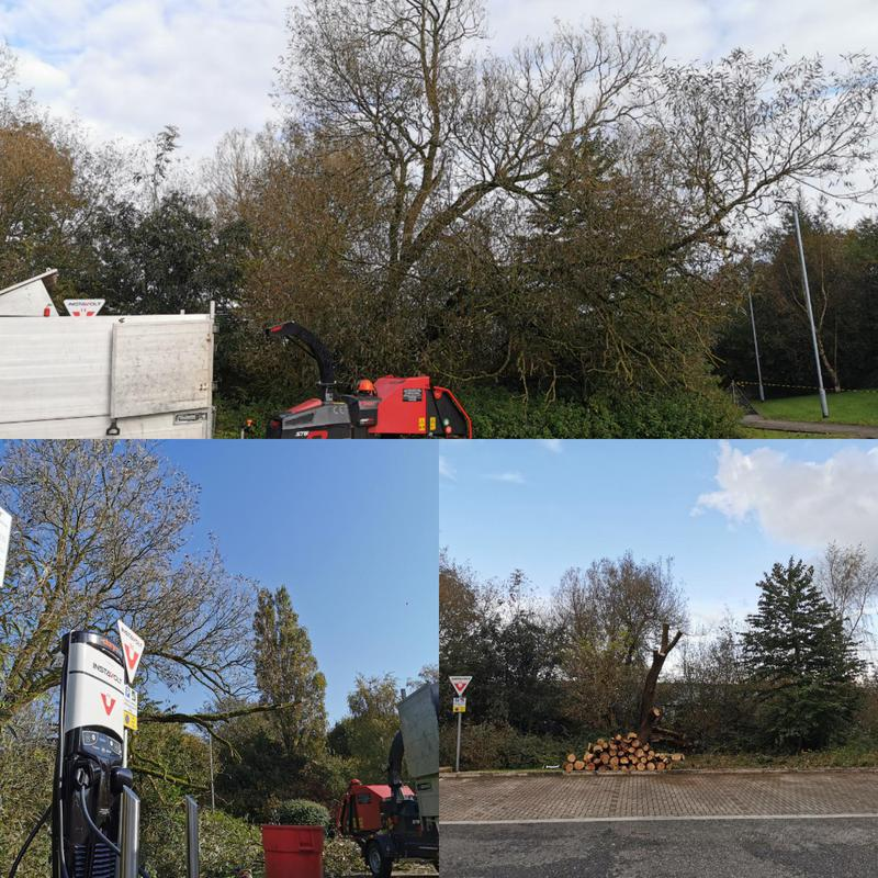 Image 12 - Here on another commercial site this storm damaged tree was threatening the electrical charge points so had to be reduced to 5mtrs allowing regrowth and easy maintenance in the future.