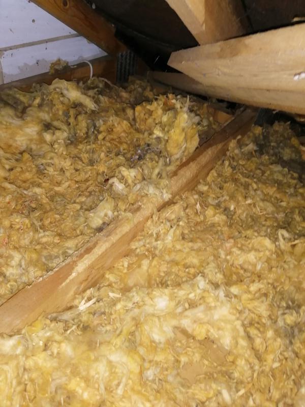 Image 7 - Squirrel damage in a loft