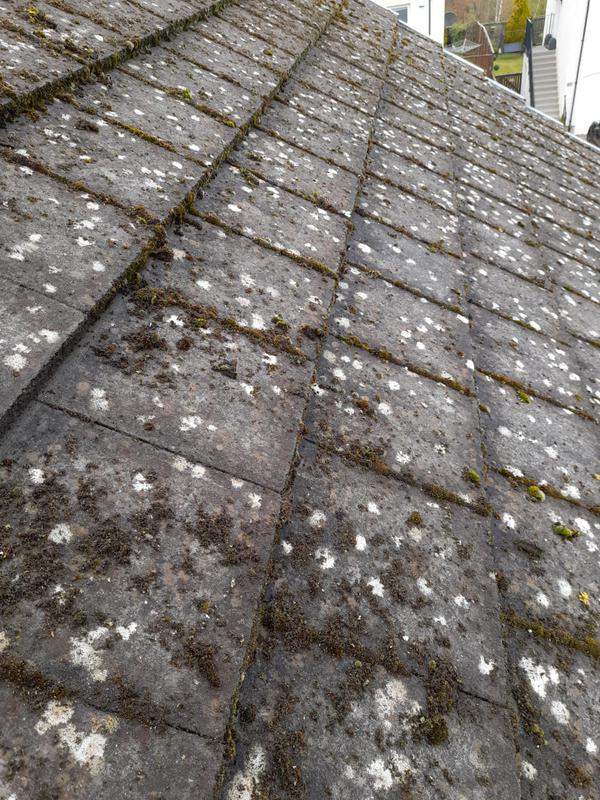 Image 8 - moss roof clean before