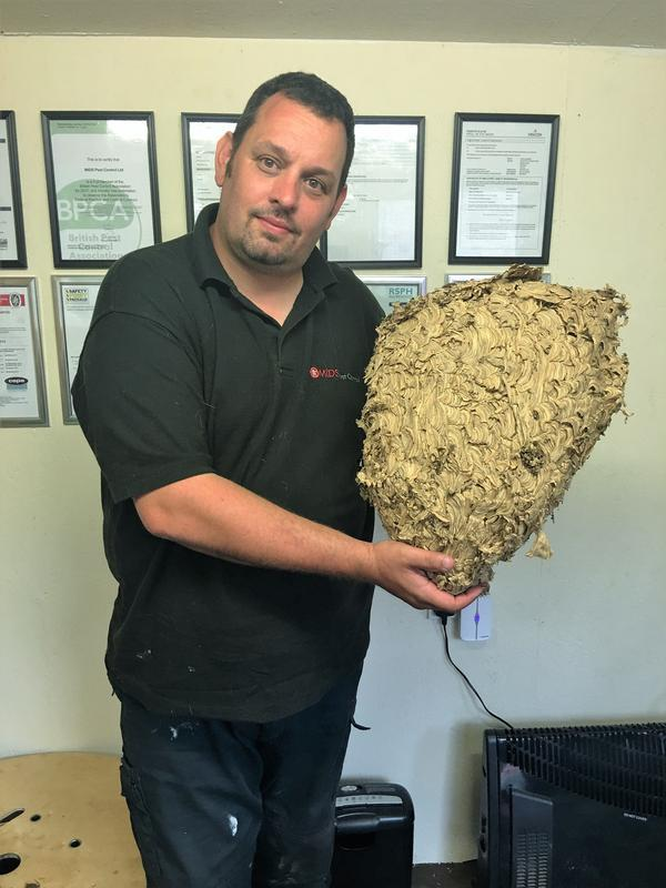 Image 21 - Wasps Nest Treated and Removed