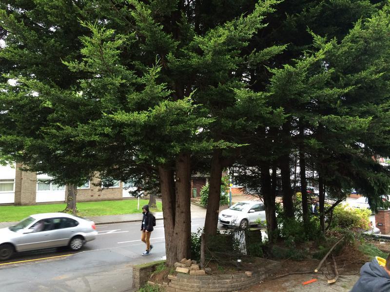 Image 43 - Conifer take down in Upmindter