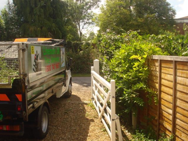 Image 96 - Hedge trim