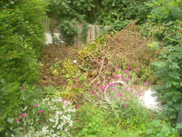 Image 49 - very over grown garden area