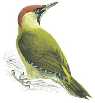 Woodpecker Fencing logo