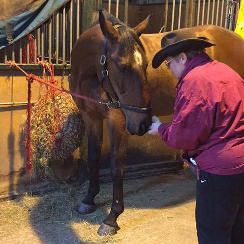 Image 4 - Checking in with a client.  I believe that horses are capable of communicating with us, if we listen. My ears are always open!!