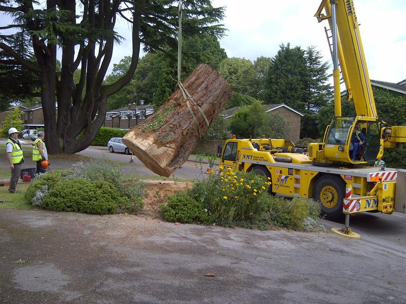 Image 8 - Trunk removal using crane