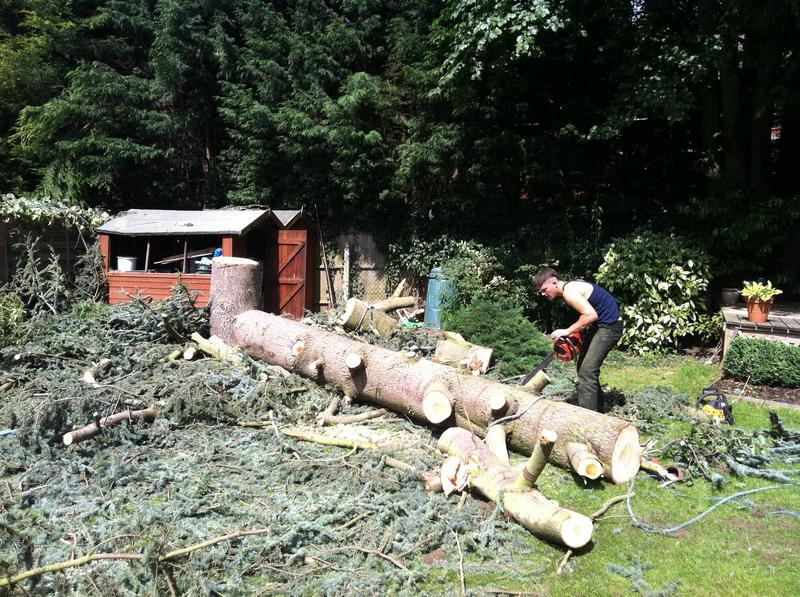 Image 89 - scottish pine after felling starting to log