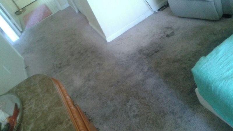 Image 35 - Carpet Cleaning