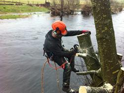 Image 20 - tree removal overhanging the river