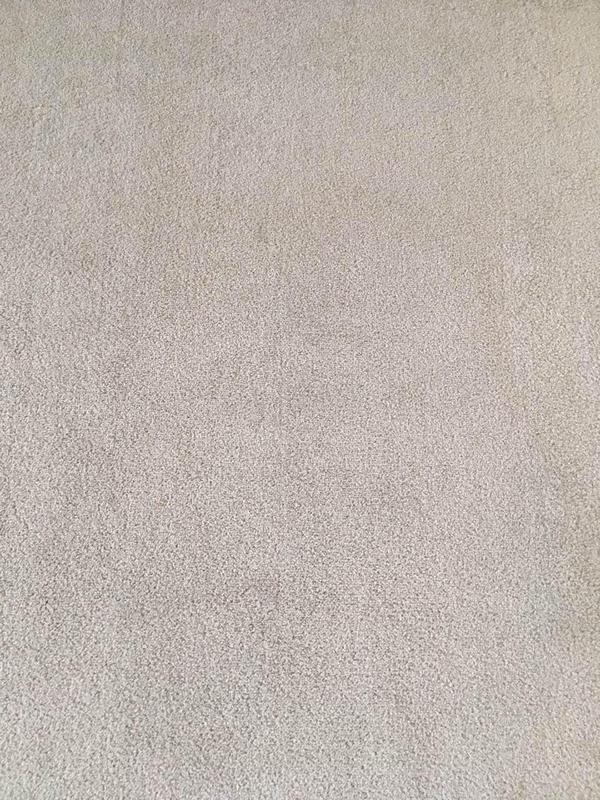 Image 2 - Professional carpet wash - after