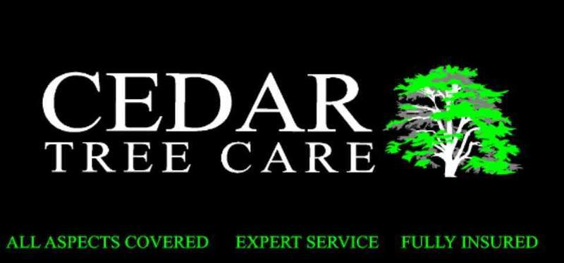 10 Cedar Tree Care logo
