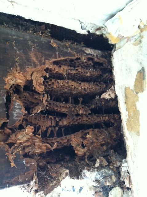 Image 18 - bedroom rotten beam