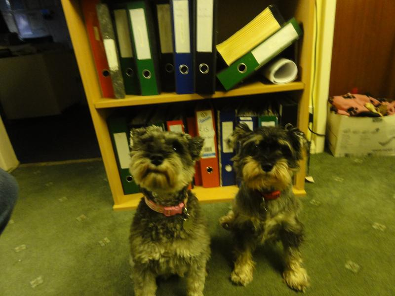 Image 2 - Millie & Pippa  - Our Company Mascots