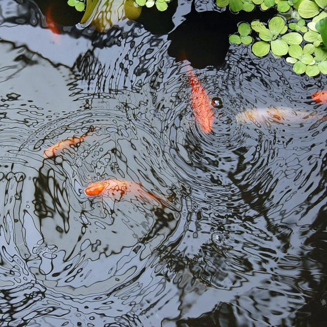 Pond Life Part 1: How to Build a Pond